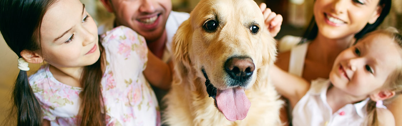 When it comes to the final care of your faithful companion,  we're here for you